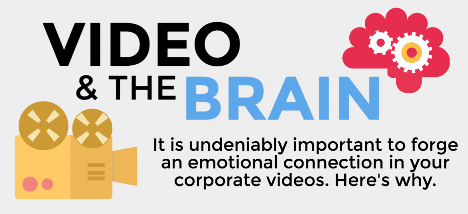 video and the brain